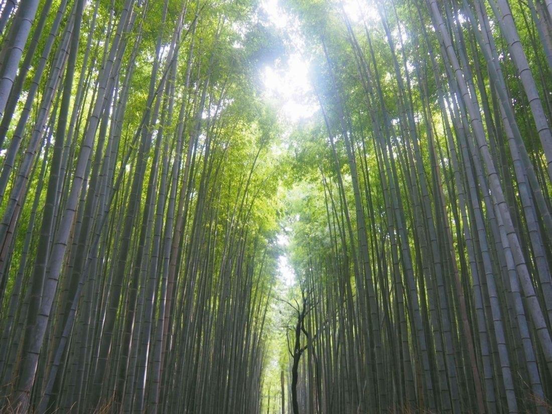 Arashiyama Bamboo Forest, Kyoto, Japan - Millionaire Mob